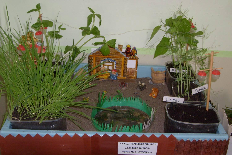 Сад и огород своими руками в детском саду 225